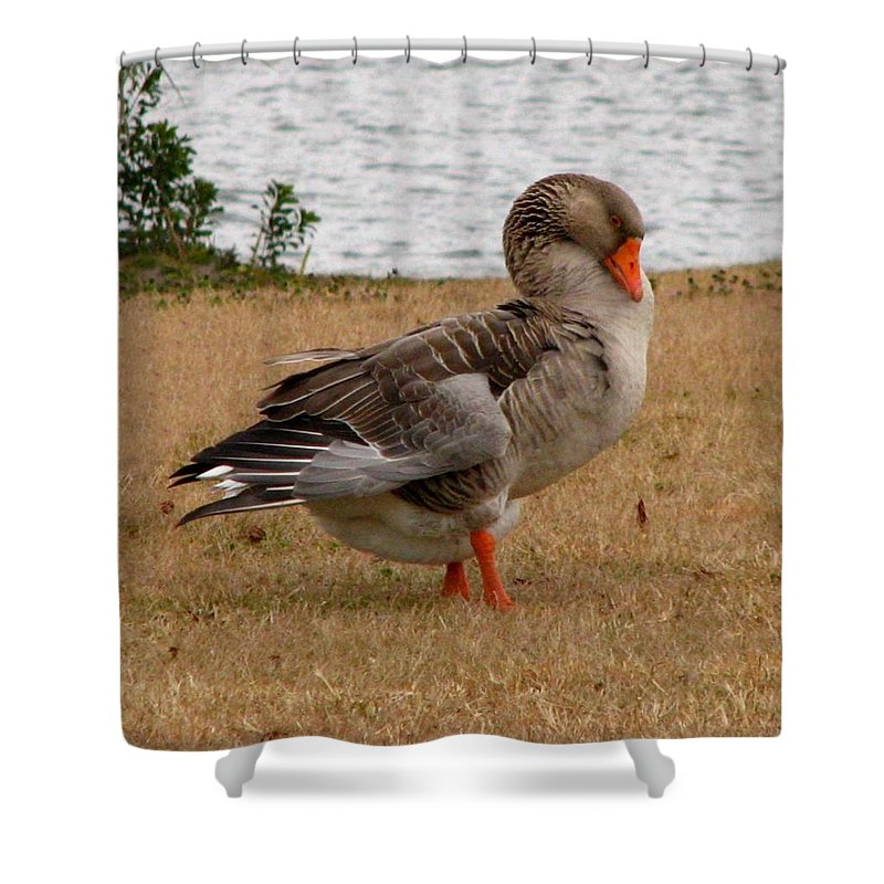Goose Shower Curtain featuring the photograph Greylag Goose 2 by J M Farris Photography