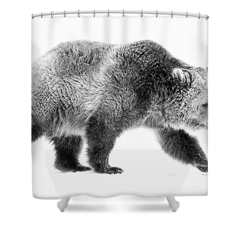 Grizzly Shower Curtain featuring the photograph Griz On The Run by Athena Mckinzie