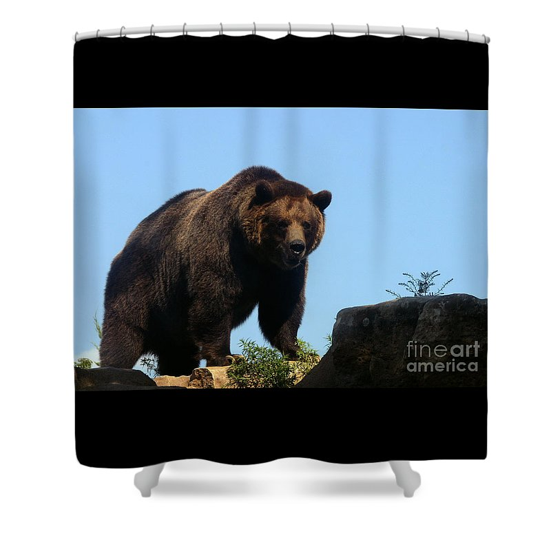 Animal Shower Curtain featuring the photograph Grizzly-7747 by Gary Gingrich Galleries
