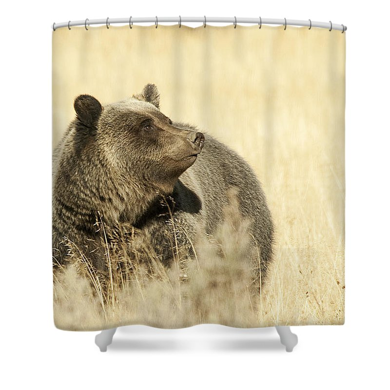 Grizzly Shower Curtain featuring the photograph Grizzly Bear by Gary Beeler