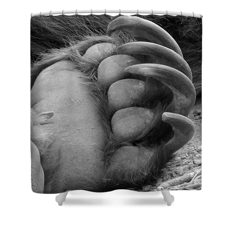 Grizzly Bear Shower Curtain featuring the photograph Grizzly Claws by Tiffany Vest