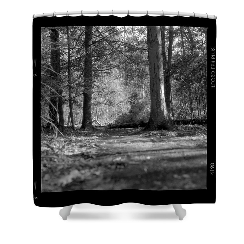 Trees Shower Curtain featuring the photograph Ground Floor by Jean Macaluso