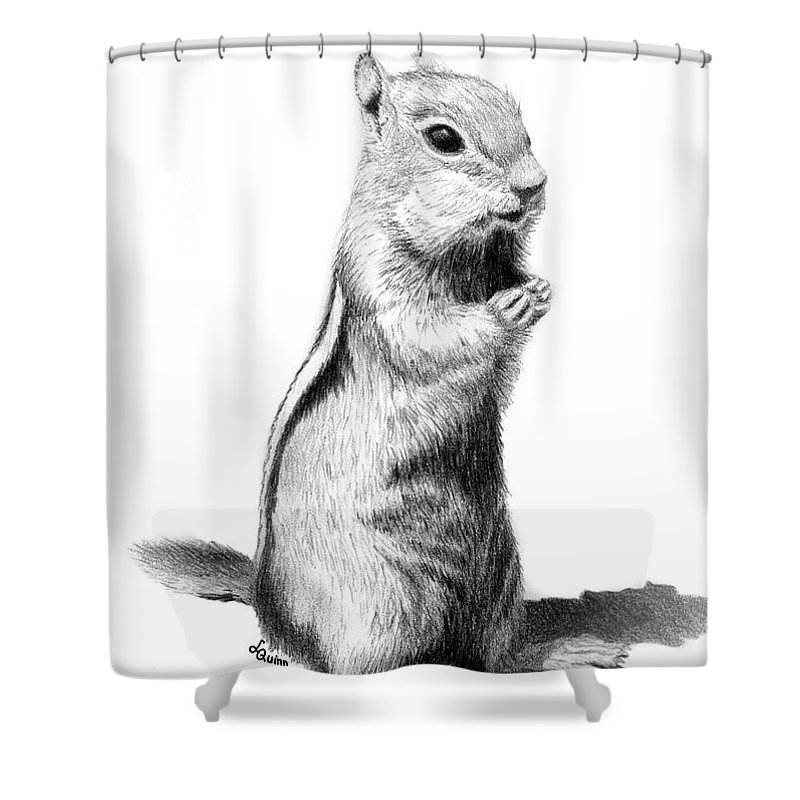 Ground Squirrel Shower Curtain featuring the drawing Ground Squirrel by Lynn Quinn