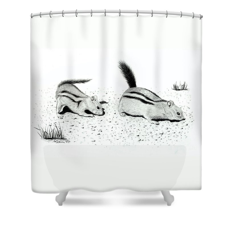 Ground Squirrels Shower Curtain featuring the drawing Ground Squirrels by Lynn Quinn