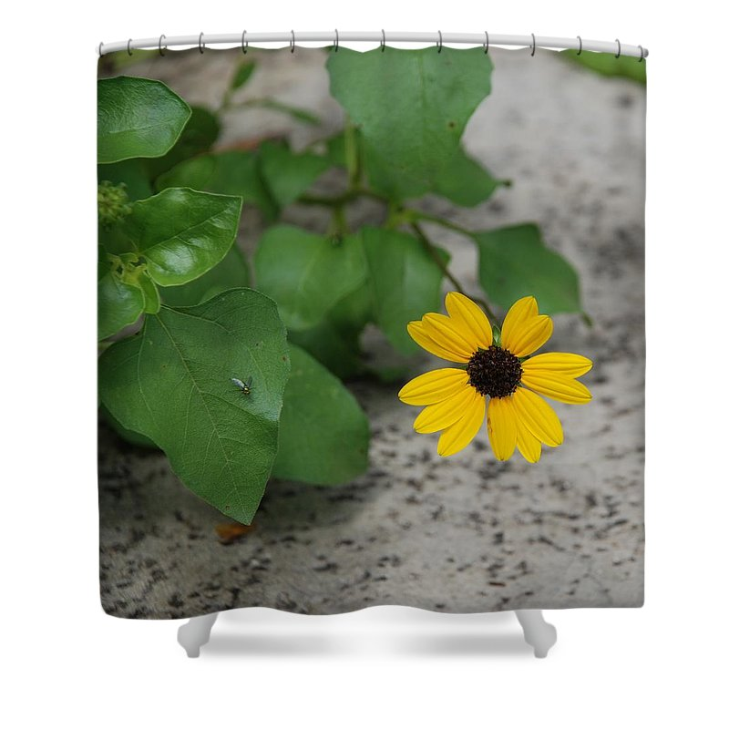 Macro Shower Curtain featuring the photograph Grounded Sunflower by Rob Hans