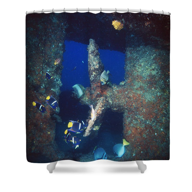 Diving Shower Curtain featuring the photograph Group Of Fish Swimming Near Prop by James Forte
