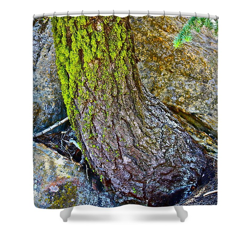 Tree Shower Curtain featuring the photograph Grow Anyway by Diana Hatcher