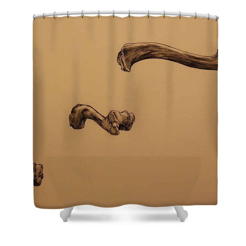 Bone Shower Curtain featuring the drawing Growing Bone by Michelle Miron-Rebbe