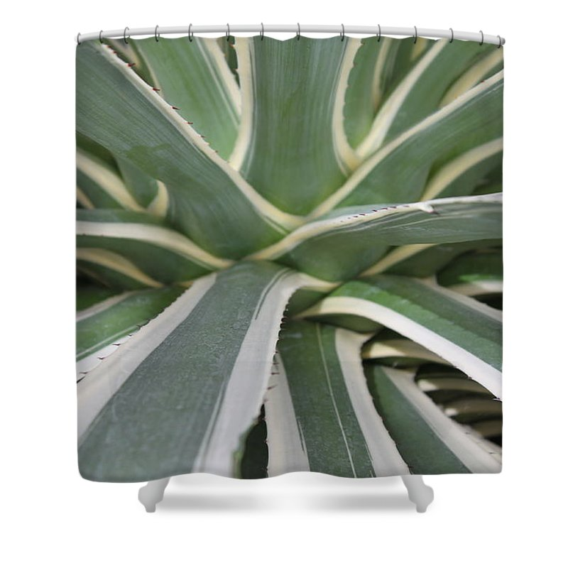 Nature Shower Curtain featuring the photograph Growth by Munir Alawi