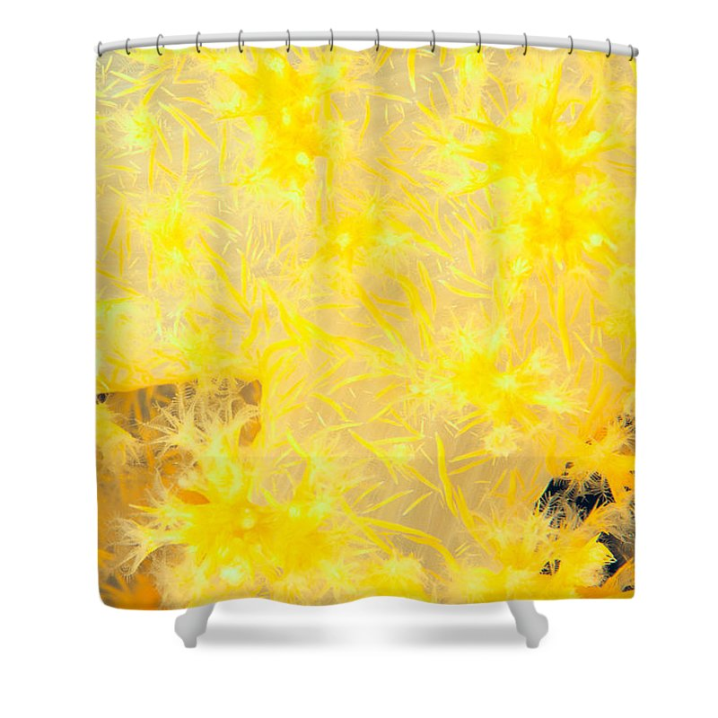 Alcyonarian Shower Curtain featuring the photograph Guam, Marine Life by Dave Fleetham - Printscapes