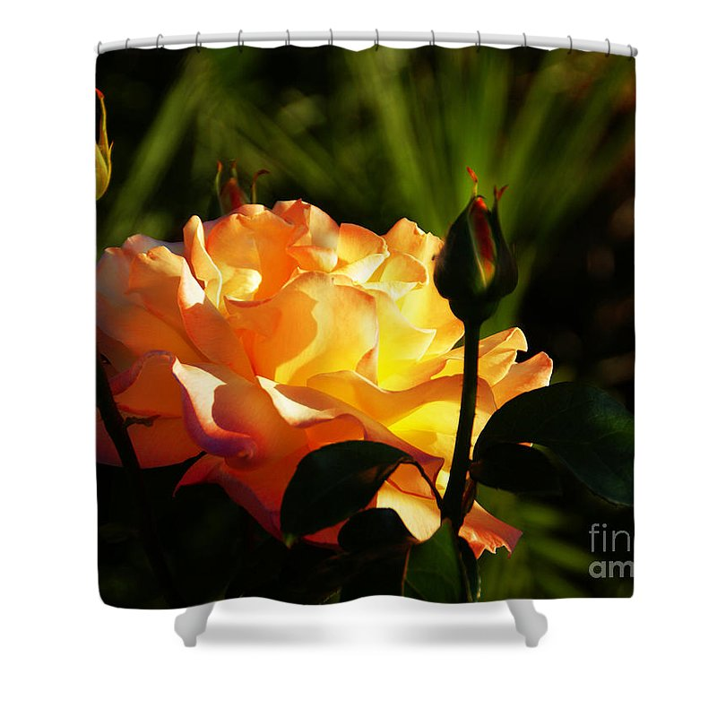 Rose Shower Curtain featuring the photograph Guarded by Linda Shafer