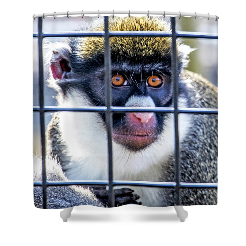 Guenon Monkey Shower Curtain featuring the photograph Guenon Monkey by Jean Haynes