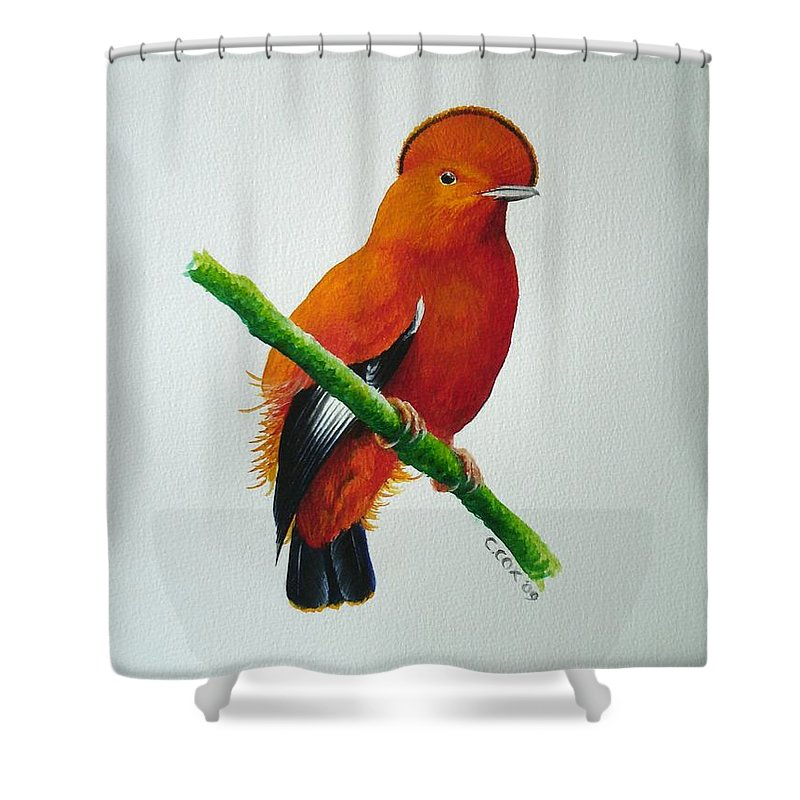 Cock-of-the-rock Shower Curtain featuring the painting Guianan Cock-of-the-rock by Christopher Cox