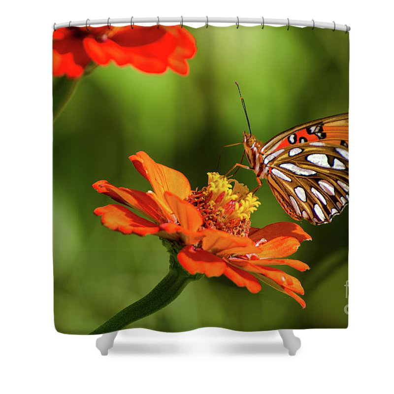 Insect Shower Curtain featuring the photograph Gulf Fritillary Butterfly by Donna Brown