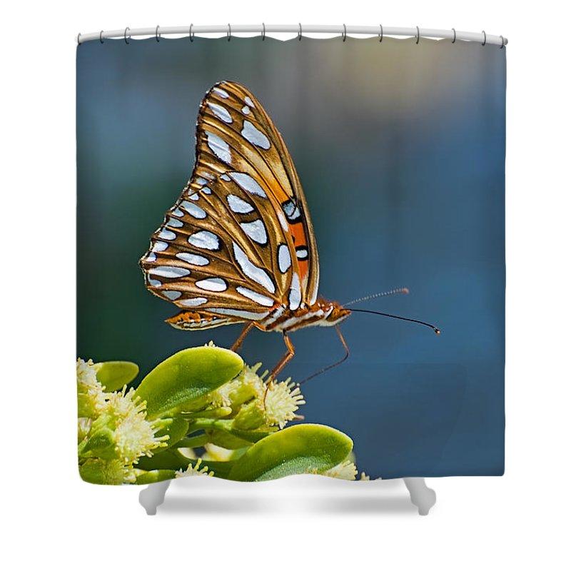 Butterfly Shower Curtain featuring the photograph Gulf Fritillary Butterfly by Terry Wieckert