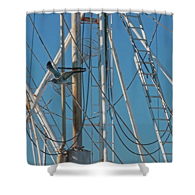 Seagull Shower Curtain featuring the photograph Gull At Sandwich Marina by Sharon Mayhak