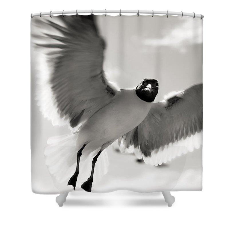 Seagull Shower Curtain featuring the photograph Gull In Flight 2 by Marilyn Hunt