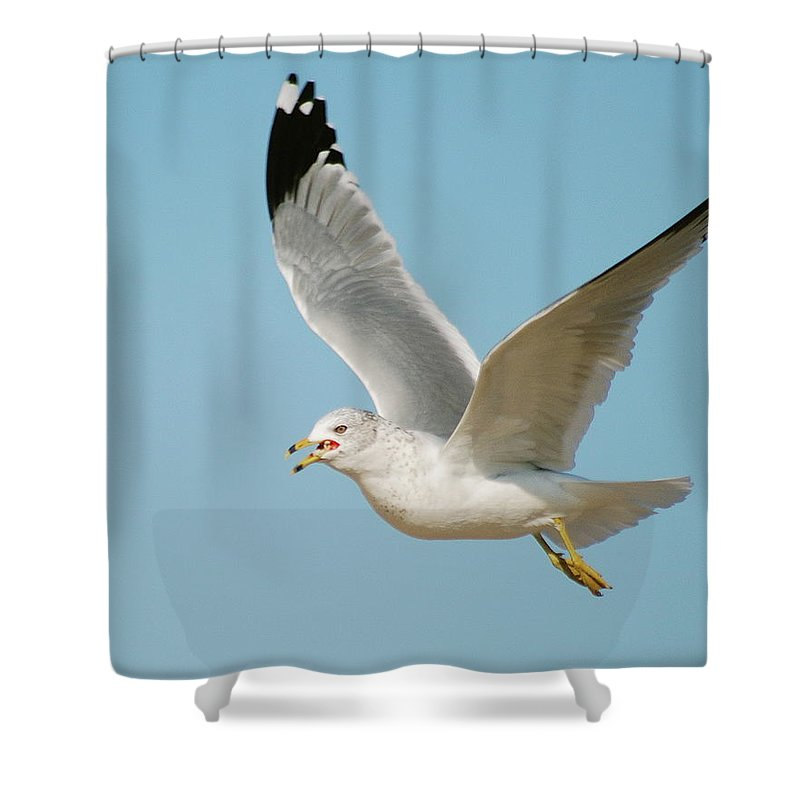Air Shower Curtain featuring the photograph Gull by Michael Peychich