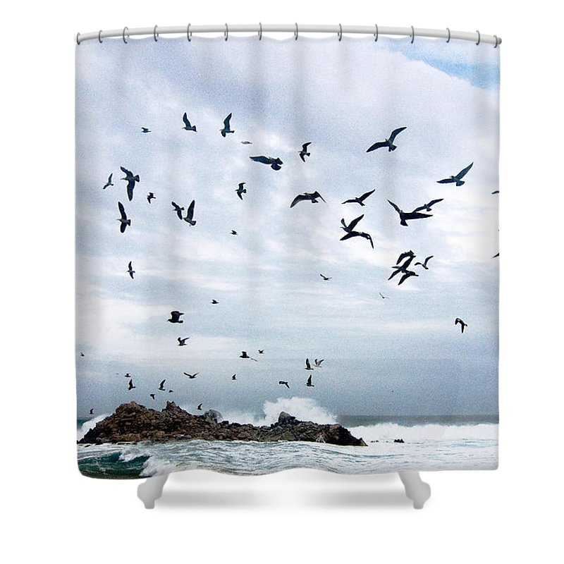 Coastal California Shower Curtain featuring the photograph Gulls Of Carmel by Norman Andrus