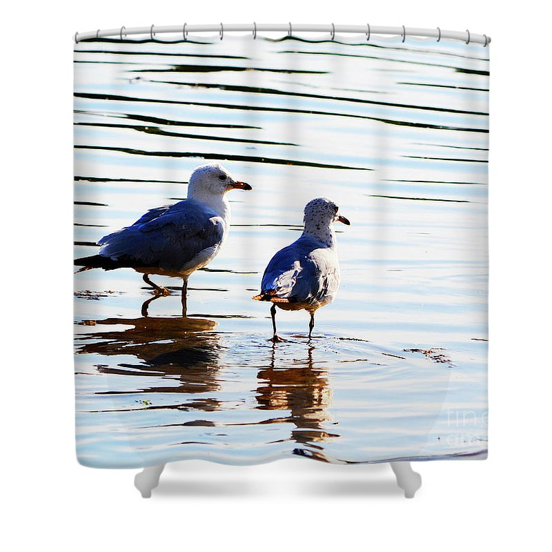 Beach Shower Curtain featuring the photograph Gulls by Traci Cottingham