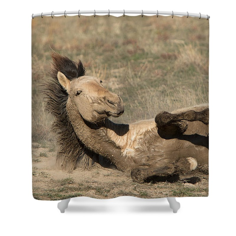 Horse Shower Curtain featuring the photograph Gunsmoke Dustbath by Kent Keller