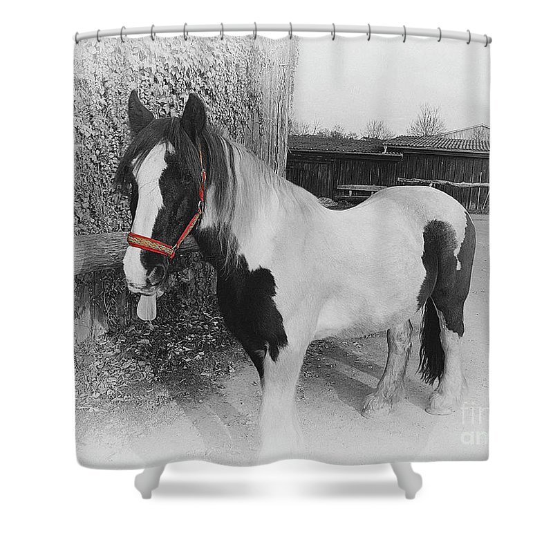 Gypsy Horse Shower Curtain featuring the photograph Gypsy Horse by Elisabeth Lucas