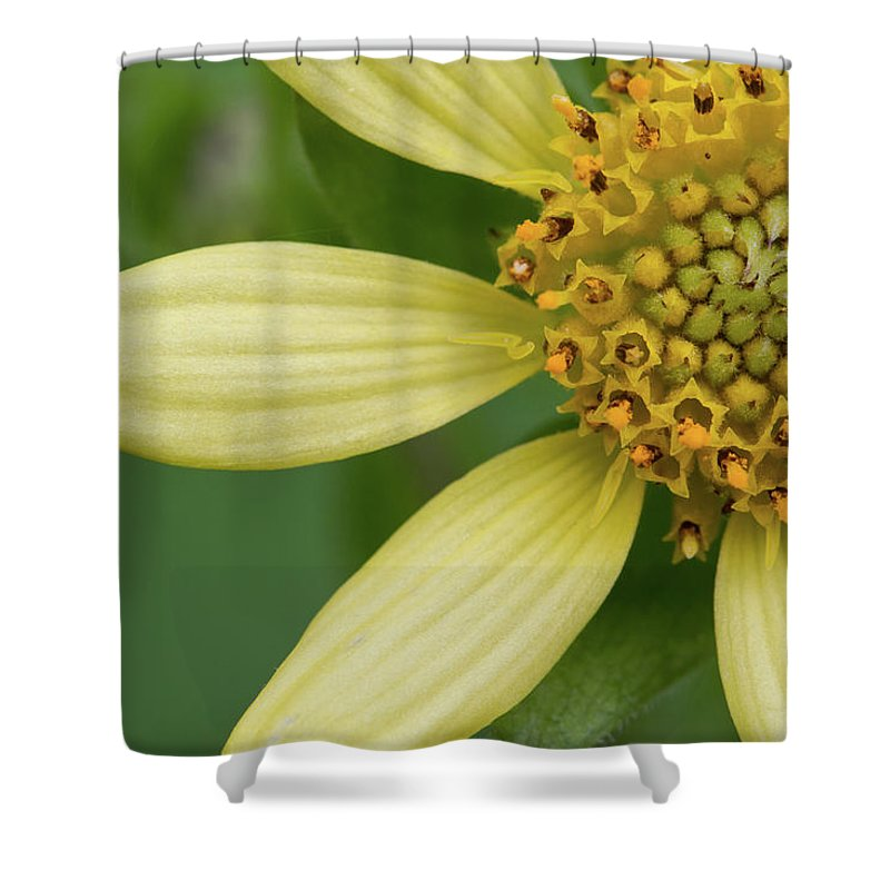 Smallanthus Uvedalia Shower Curtain featuring the photograph Hairy Leafcup #2 by Paul Rebmann