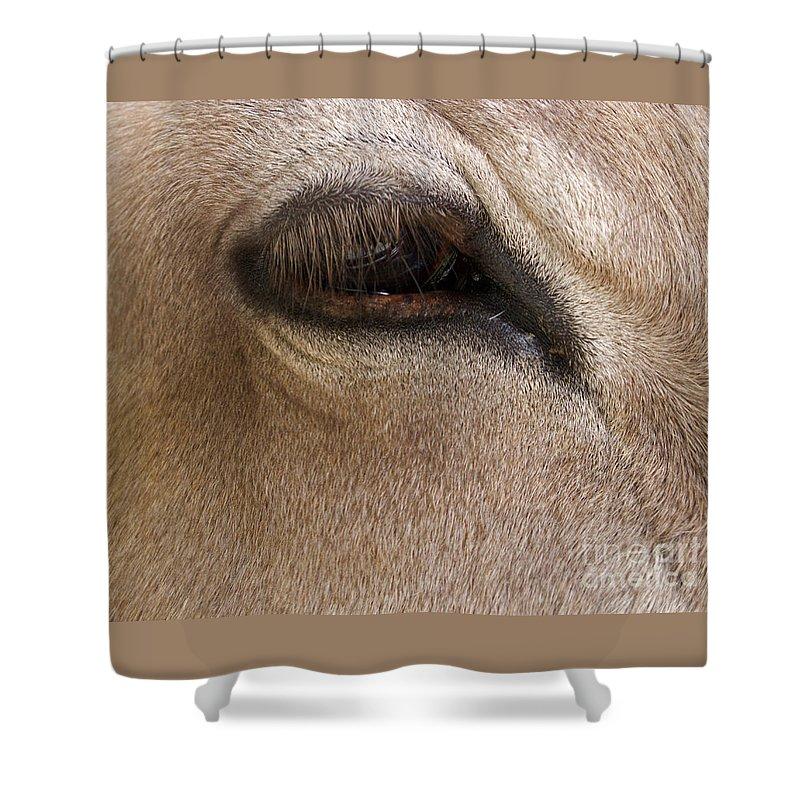 Calf Shower Curtain featuring the photograph Half Asleep by Ann Horn