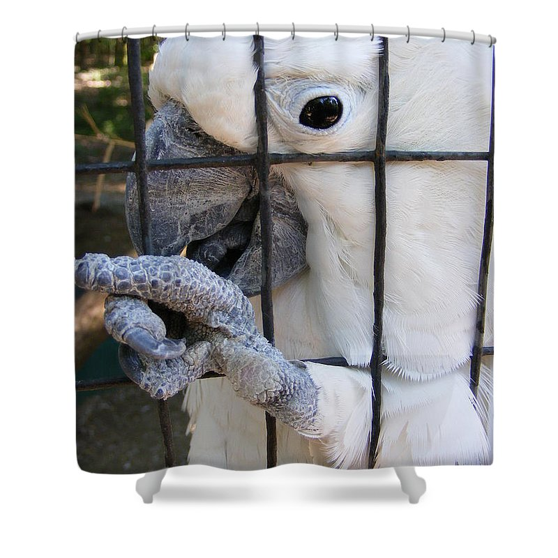 Bird Shower Curtain featuring the photograph Hand Me The Key Please by Ed Smith