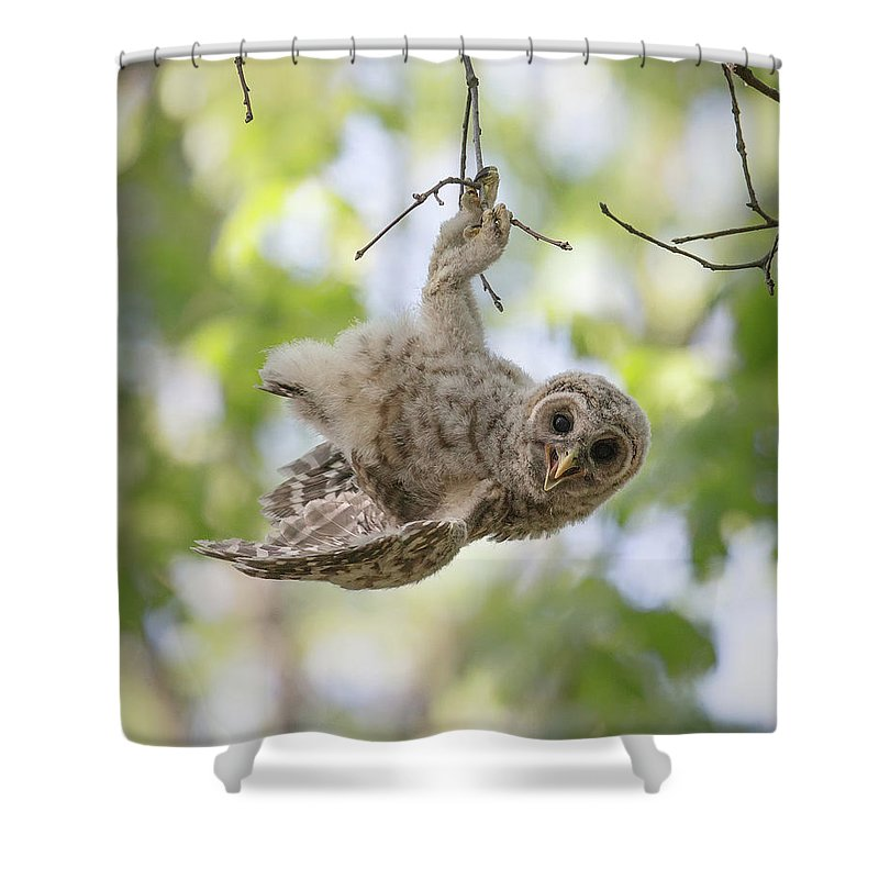 Owl Shower Curtain featuring the photograph Hang In There by Christopher Ciccone
