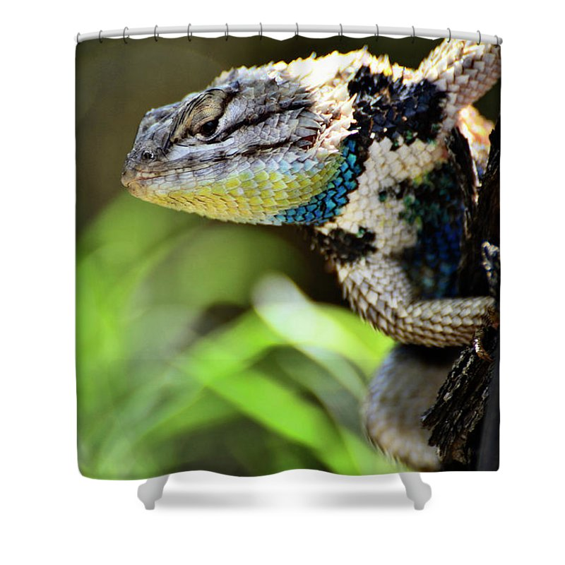 Spiny Lizard Shower Curtain featuring the photograph Hangin' Out by Saija Lehtonen