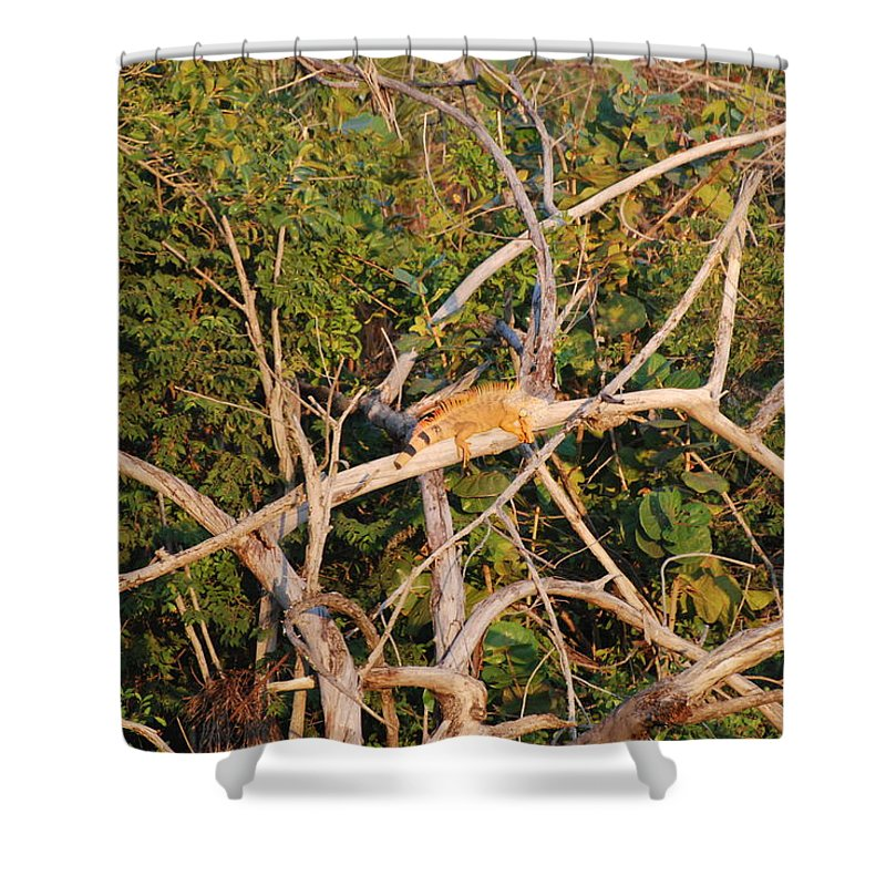 Iguana Shower Curtain featuring the photograph Hanging Iguana by Rob Hans