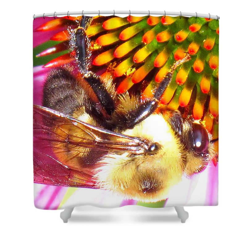 Bee Shower Curtain featuring the photograph Hanging In There by Ian MacDonald