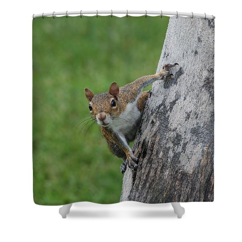 Squirrel Shower Curtain featuring the photograph Hanging On by Rob Hans
