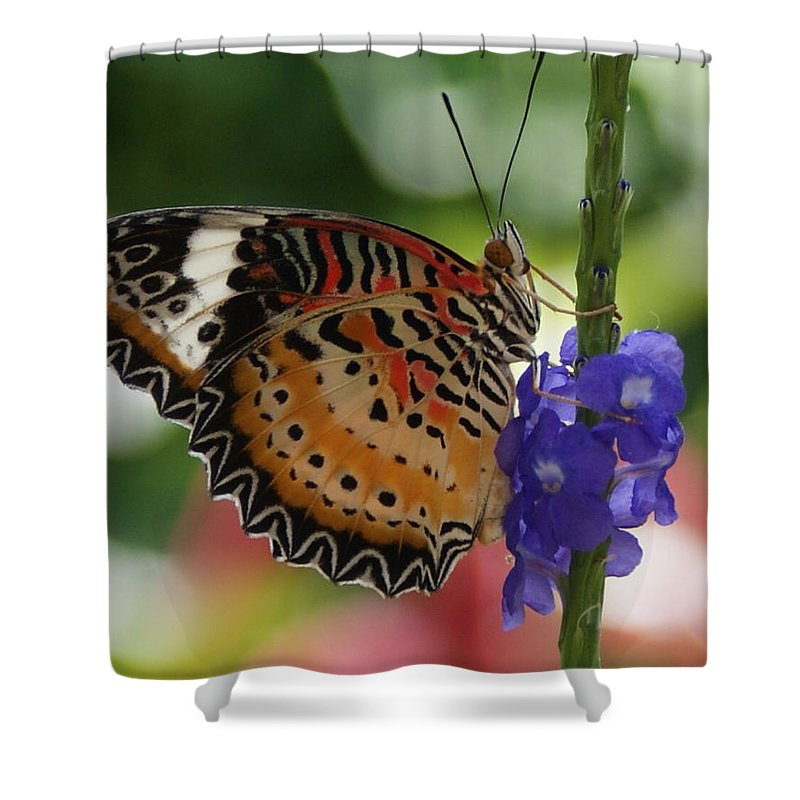Butterfly Shower Curtain featuring the photograph Hanging On by Shelley Jones