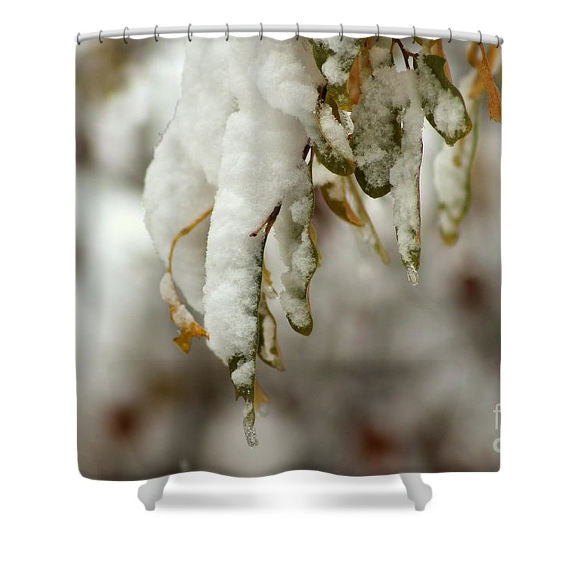 Winter Shower Curtain featuring the photograph Hanging Snow by Leone Lund