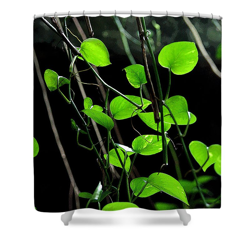 Plants Shower Curtain featuring the photograph Hanging Vines by Joe Kozlowski