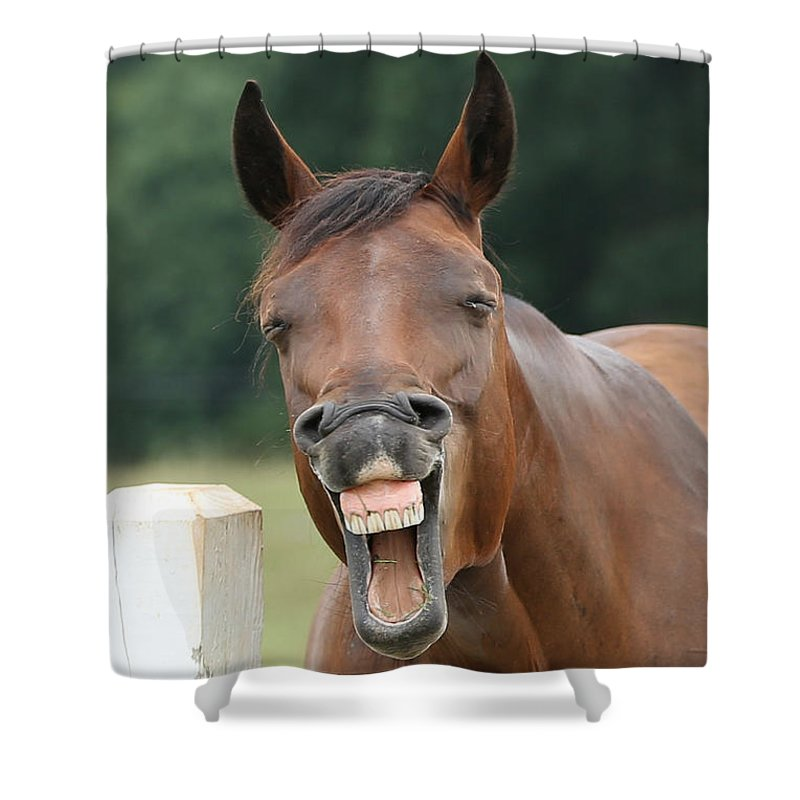 Emotions Shower Curtain featuring the photograph Happy Birthday Smiling Horse by Jt PhotoDesign