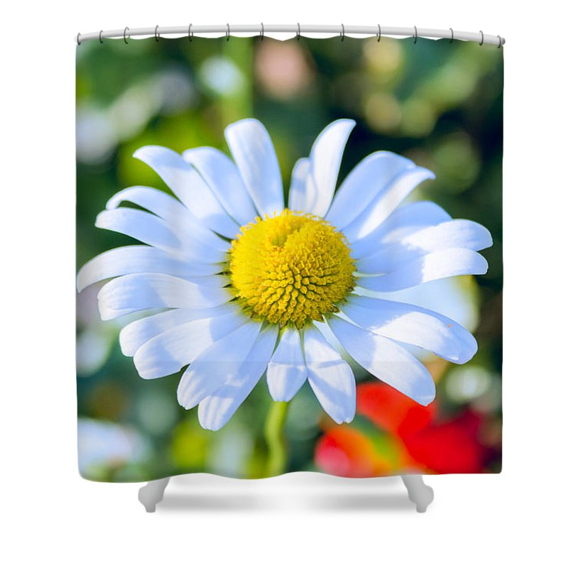 Sunshine Shower Curtain featuring the photograph Happy by Cindy Grundsten