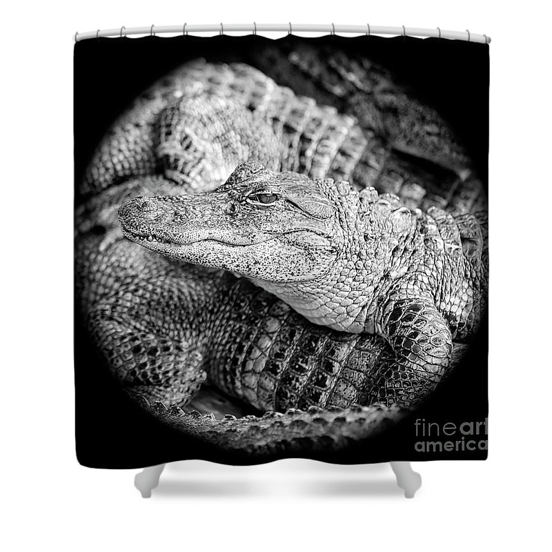 Gator Shower Curtain featuring the photograph Happy Gator Black And White by Carol Groenen