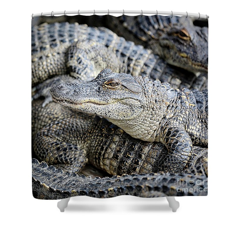 Gator Shower Curtain featuring the photograph Happy Gator by Carol Groenen