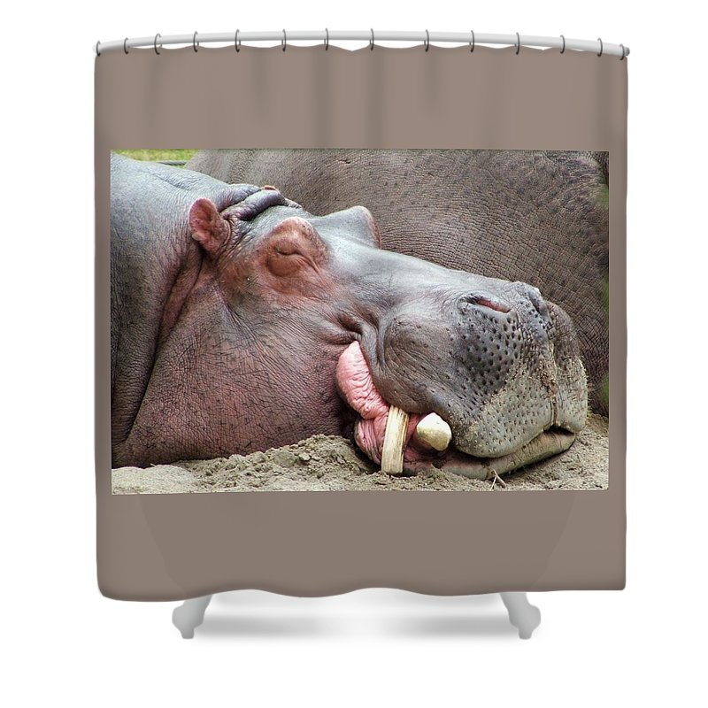 Hippopotamus Shower Curtain featuring the photograph Happy Hippo by Tiffany Vest