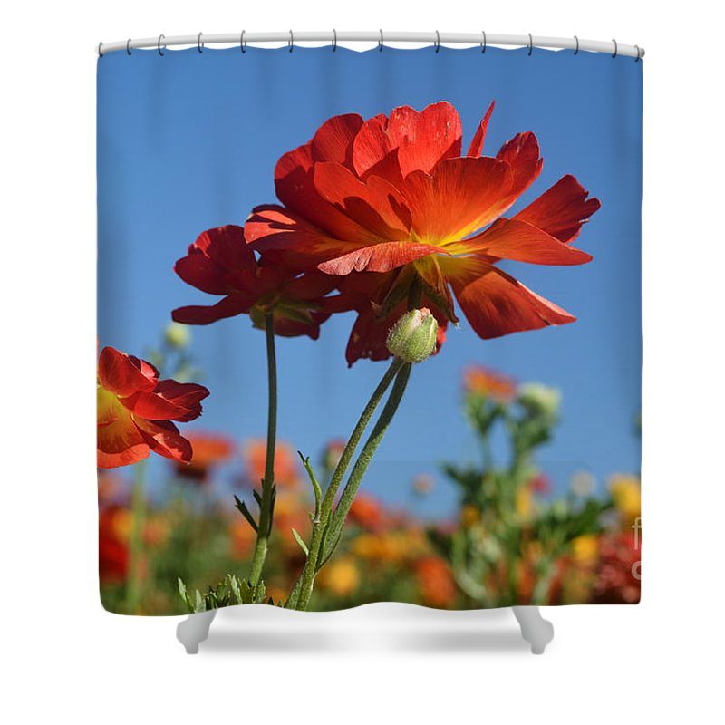 The Flower Fields At Carlsbad Shower Curtain featuring the photograph Happy Mother's Day Flowers by Luv Photography