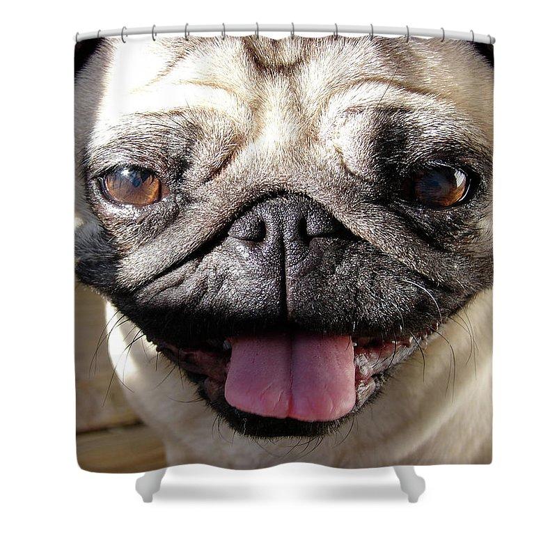 Happy Shower Curtain featuring the photograph Happy Pug by Brett Winn