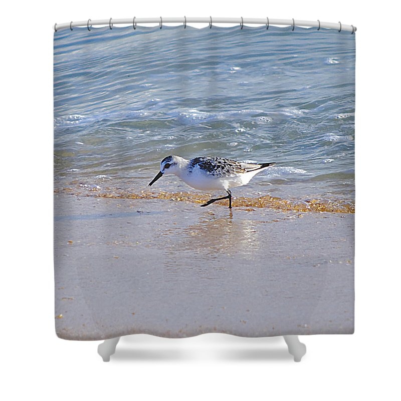 Sandpiper Shower Curtain featuring the photograph Happy Sandpiper by Kenneth Albin