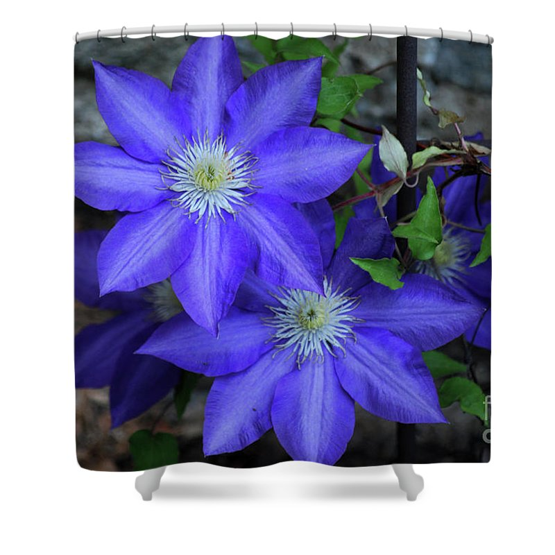 Clematis Shower Curtain featuring the photograph Happy To Be Here by Lori Tambakis