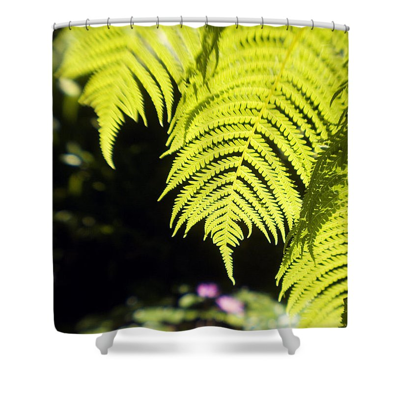 Abstract Shower Curtain featuring the photograph Hapuu Ferns by Ron Dahlquist - Printscapes