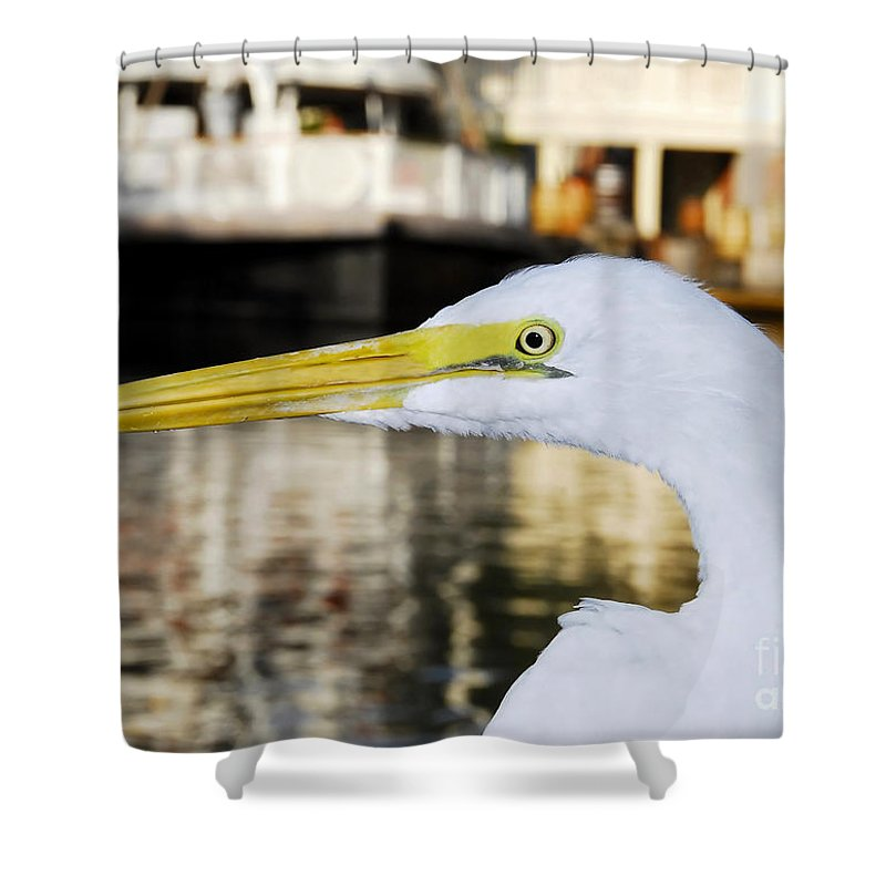 Egret Shower Curtain featuring the photograph Harbor Egret by David Lee Thompson