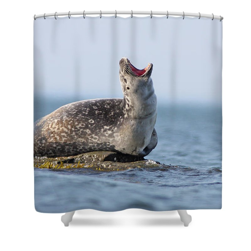 Harbour Shower Curtain featuring the photograph Harbour Seal by Mircea Costina Photography