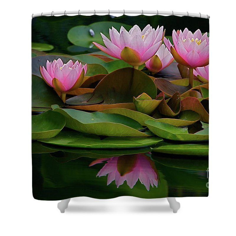 Hardy Shower Curtain featuring the photograph Hardy Pink Water Lilies by Byron Varvarigos